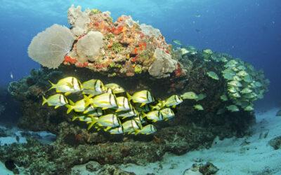 Die MSC Foundation und die Ba'a Foundation schließen sich zusammen, um den Schutz von Korallenriffen zu fördern