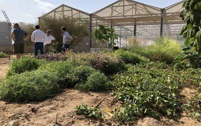 Costa Crociere Foundation und Sahara Forest Project bündeln ihre Kräfte für eine nachhaltige Landwirtschaft in der Wüste Jordaniens.